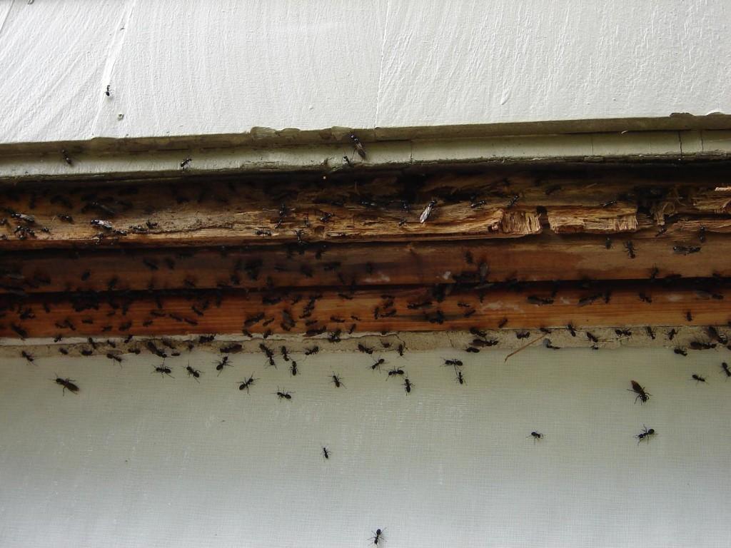 Bugs (2)