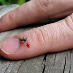 How to Get Rid of Mosquito Bites by Applying Home Remedies and over-the Counter Medication