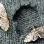 Do You Want to Know How to Get Rid of Moths